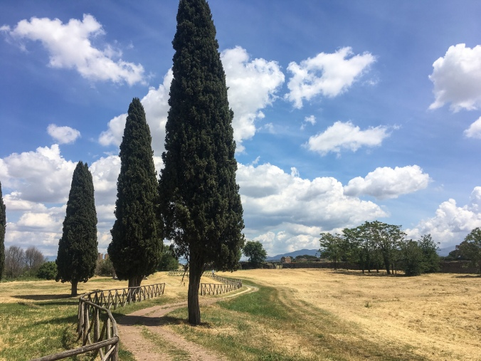Tall Italian trees line a country path in a field off the Appia Antica